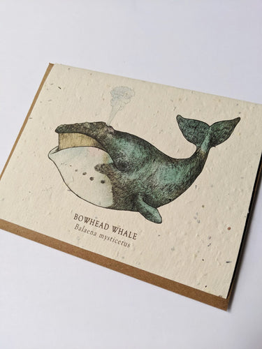 a plantable seed card - the card has a textured look from the seeds imbedded in the paper. There is a whale drawing on this one that says