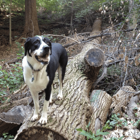 Image: Our Dog on a Fallen Tree