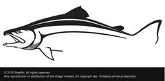 Steelfin Salmon Decal - Black