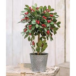 Potted Holly w/Berry Topiary, 18