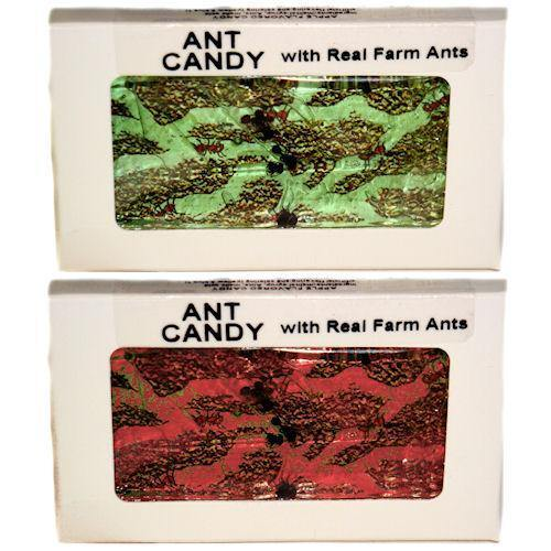 hotlix hard candy ants
