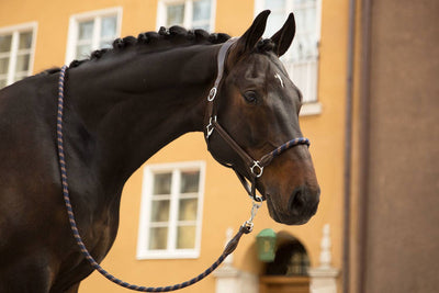 IQ Horse Ps of Sweden, Halfter + Führstrick/ Working Halfter, Full