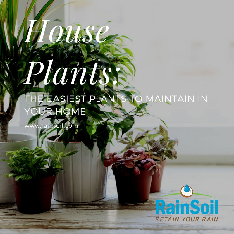 Stayin' Alive: House Plants That (Probably) Won't Die on You | RainSoil