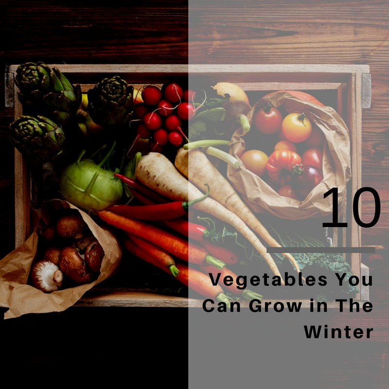 Top Ten Vegetables to Grow in the Winter