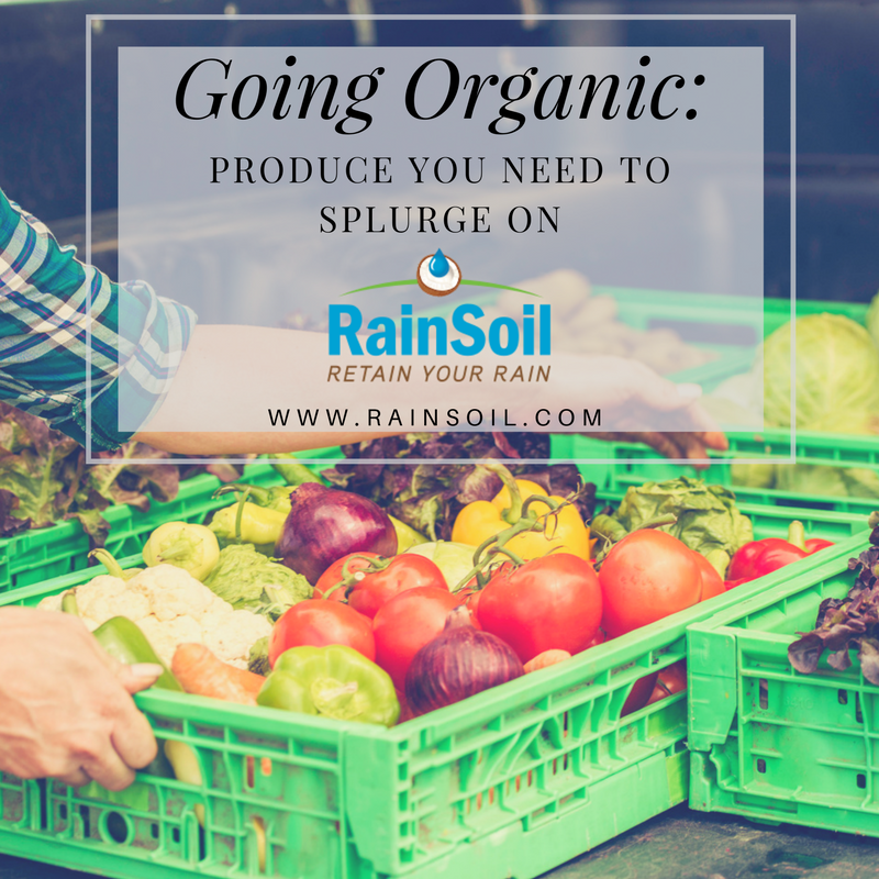 Going Organic: Produce You Need to Splurge On