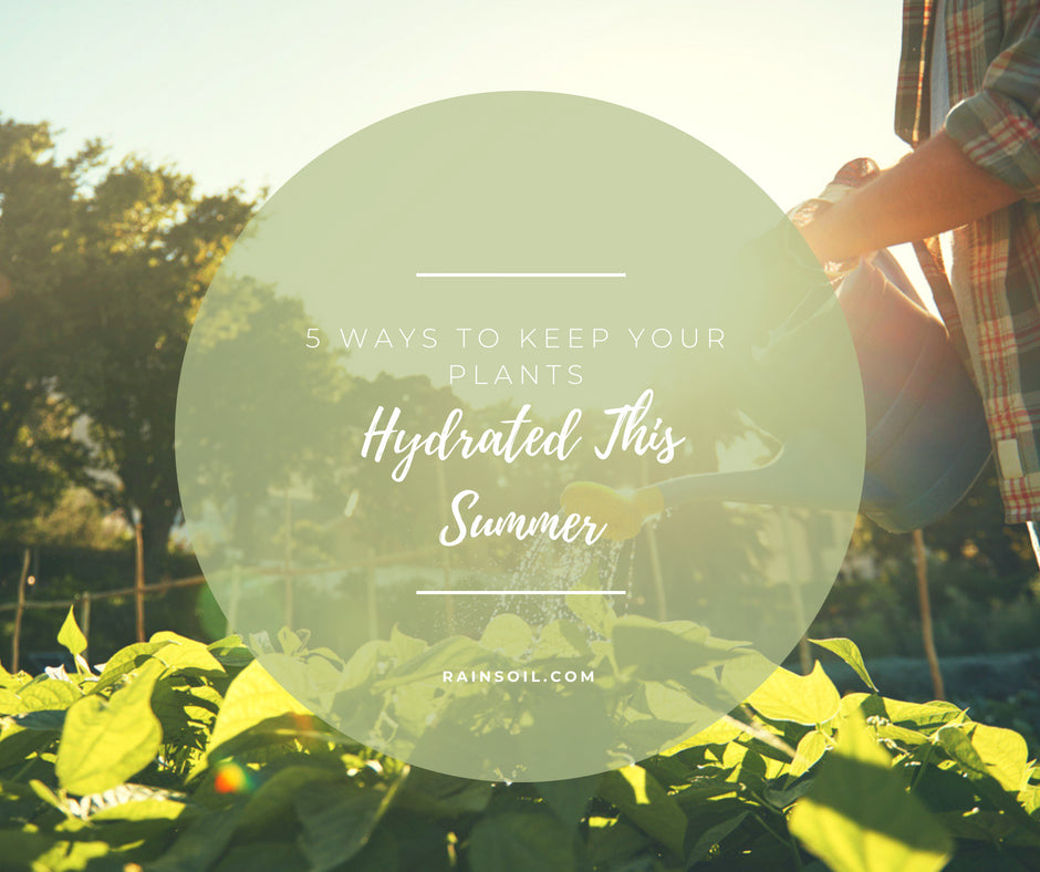 5 Ways to Keep Your Plants Hydrated in The Summer Heat | RainSoil