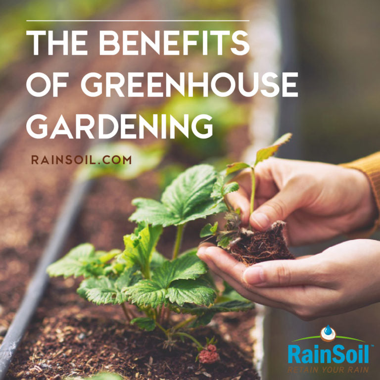 Greenhouse Greatness: The Benefits of Protected Gardening | RainSoil