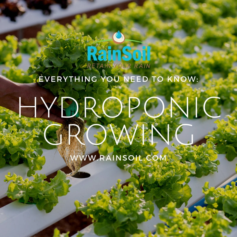 Hydroponic Growing: What You Need to Know | RainSoil