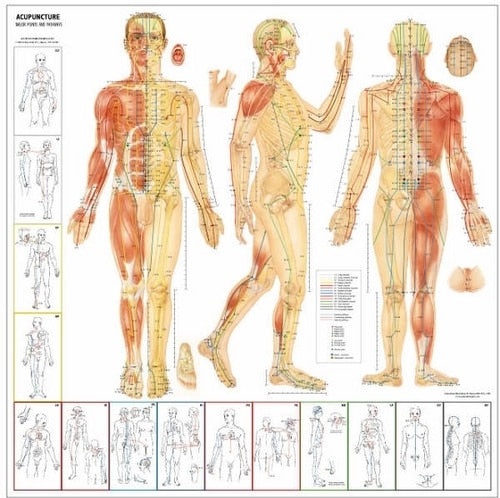 Major Points and Pathways Acupuncture Chart