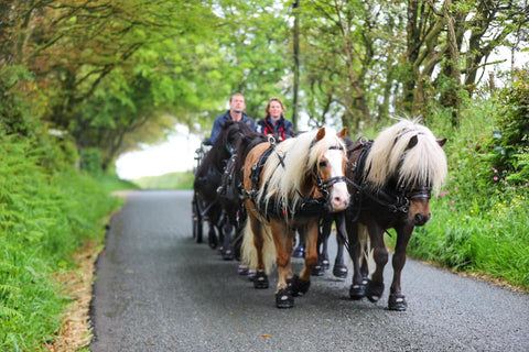 Emma Massingale driving her ponies