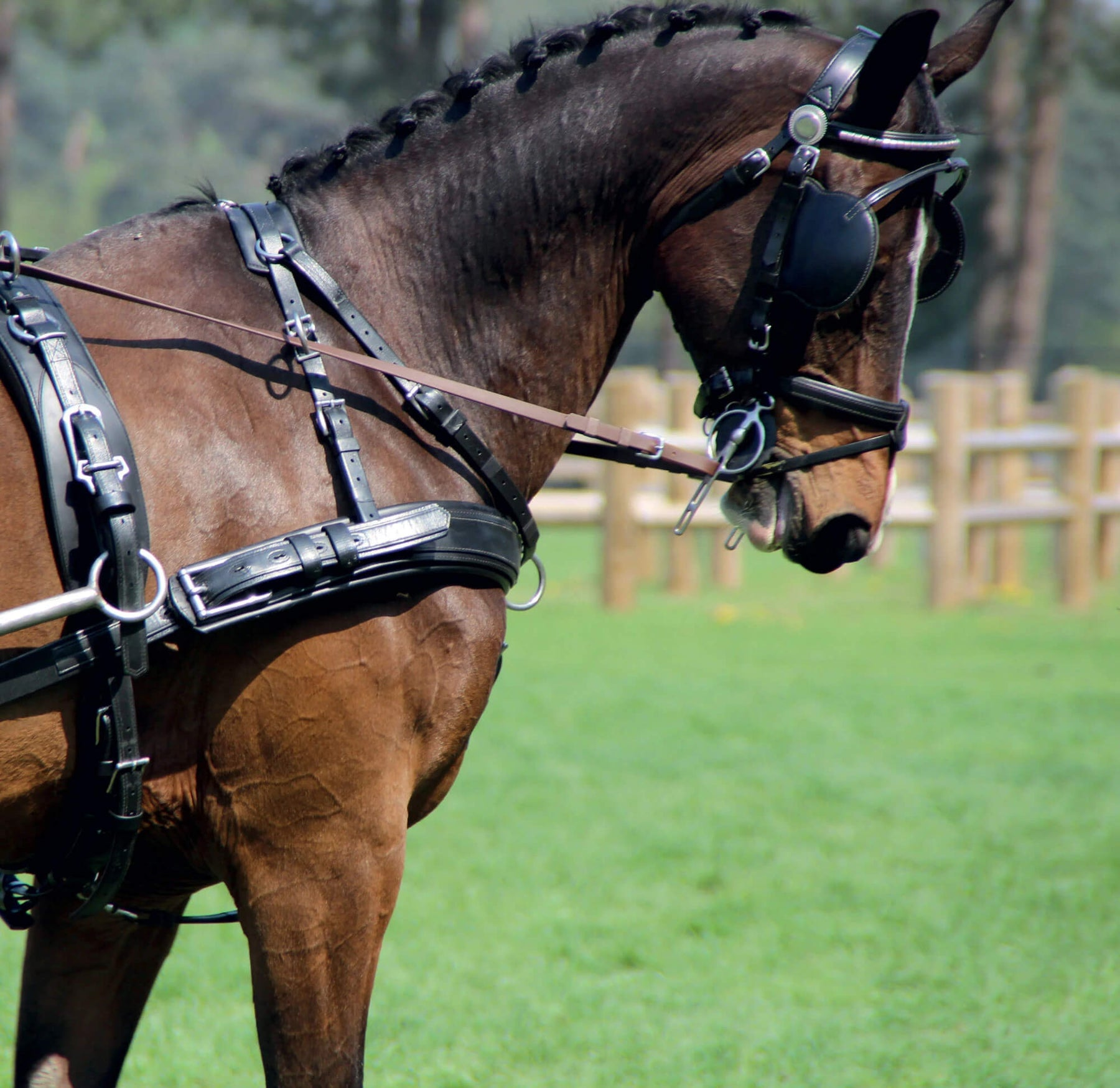 Full Size Horse Driving Harness Leather Complete Set