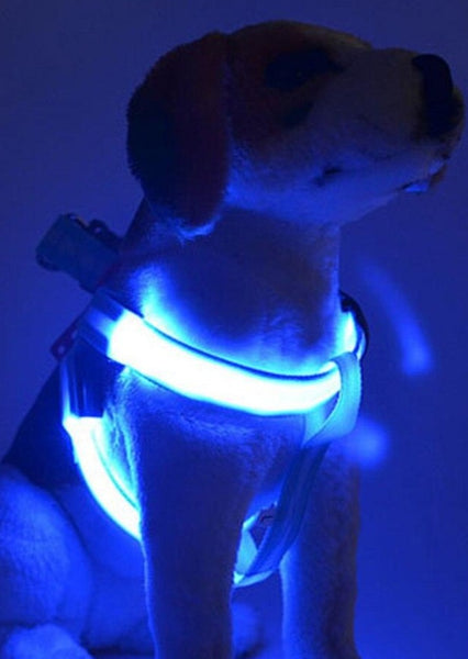 RECHARGEABLE LED HARNESS