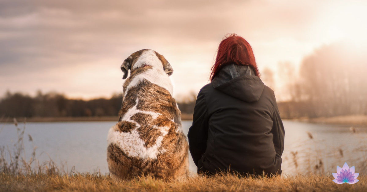 An empath lady heals herself and her dog pet at nature.