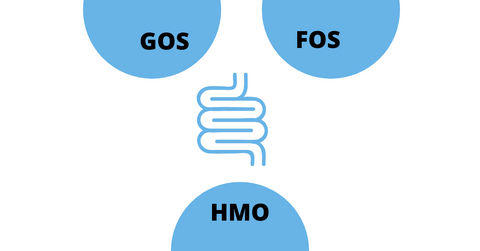graphic of intestines with semi circles with text GOS, FOS and HMO