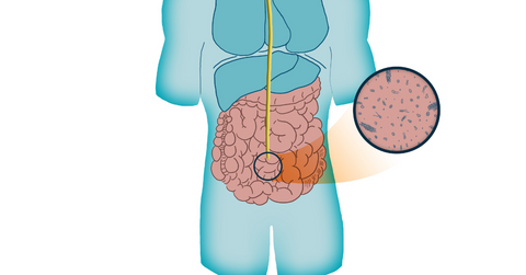 illustration of gut microbiome inside human body