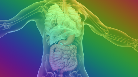 Rainbow hued see-through human body showing gut