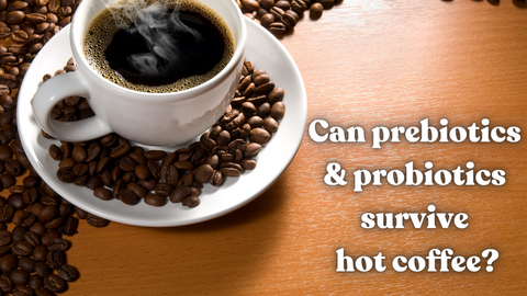 """Hot coffee in white mug with text """"Can probiotics & prebiotics survive hot coffee?"""""""