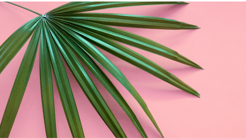 Green plant leaves on pink background