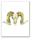x PRINTS | RACHEL BROWN | RAM SKULL