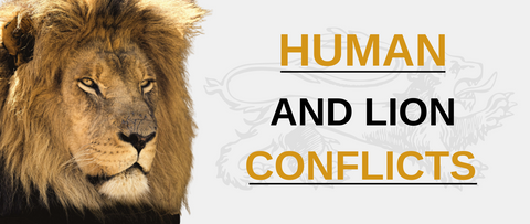 Human and lion conflicts.
