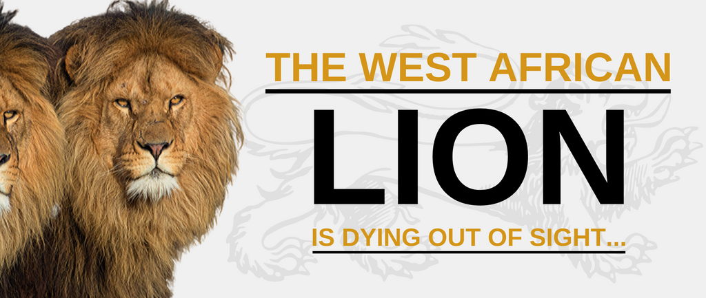 The West African Lion is dying out of sight...