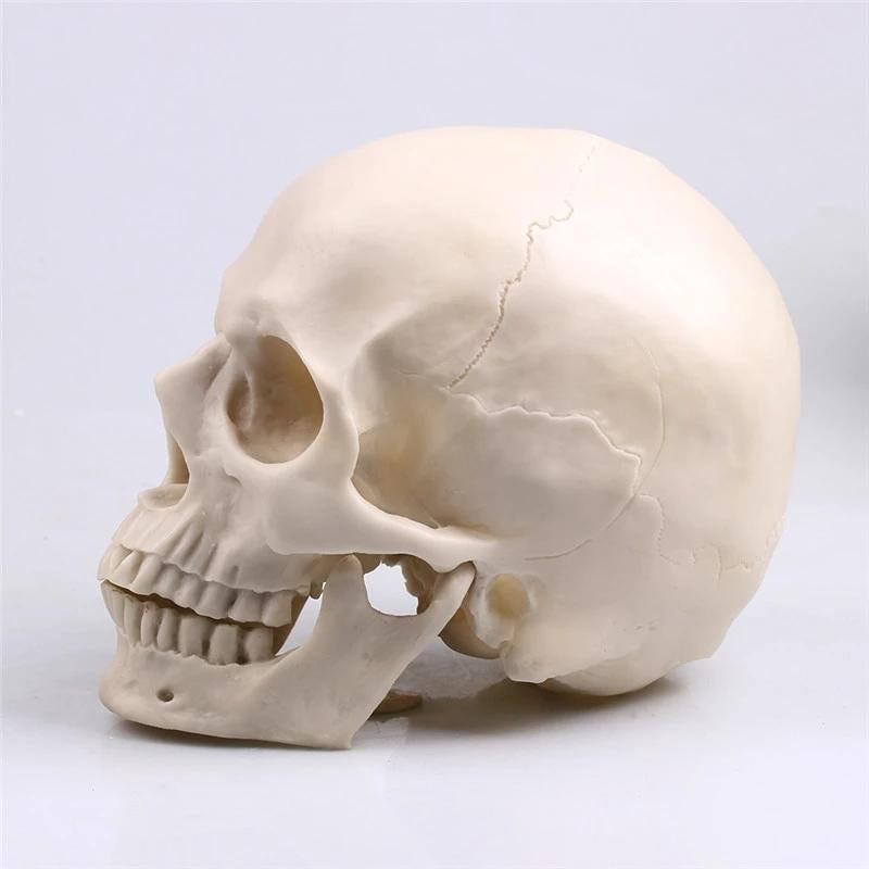 Skull Statue Sculpture Resin Crafts Painting Props Bar Counter Home Decor - Targen