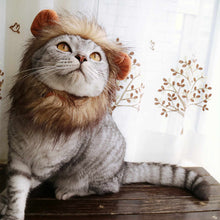 Load image into Gallery viewer, Cute Pet Cat Costume Lion Mane Wig Cap Hat  Clothes - Targen
