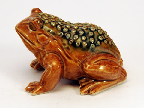 Small frog with pimpled back