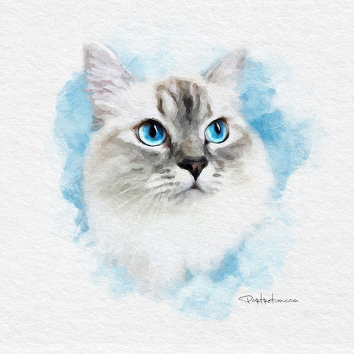 Cat portrait from photos