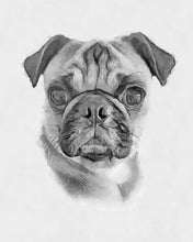 Load image into Gallery viewer, Watercolor Pet Portrait from Photos
