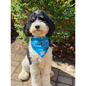 ~CUSTOM | pet bandana~