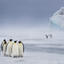 Which Way - Emperor Penguins - Snow Hill, Antarctica