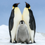 Family (Horizontal) - Emperor Penguin Chick with Parents - Snow Hill, Antarctica