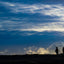 King Penguin Silhouette - Falkland Islands
