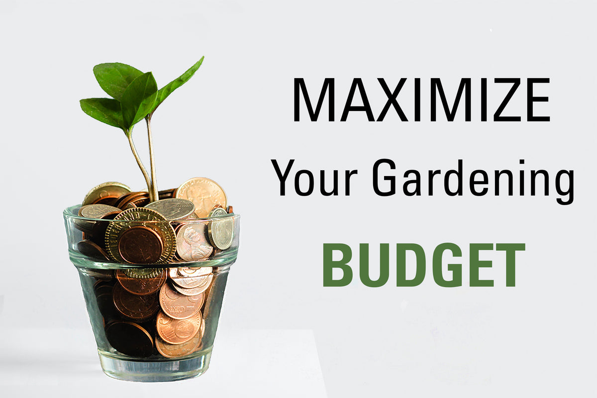 Maximize Your Gardening Budget 💸🌿🤑