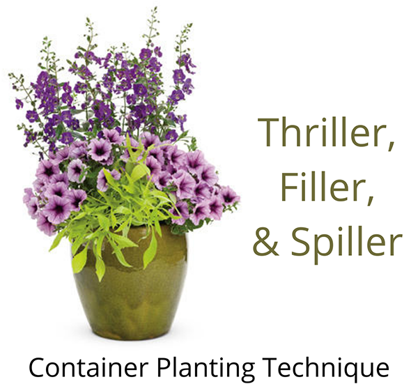 Container Gardening: Thriller, Filler, Spiller Technique 🌾🌸🌿