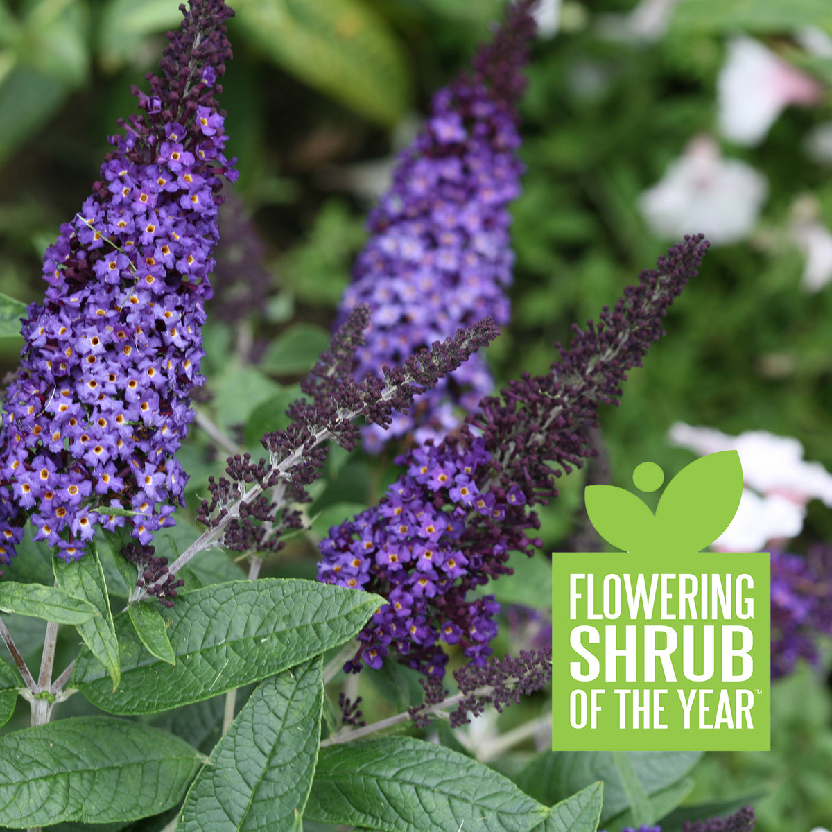 Proven Winners® 2021 Plants of the Year