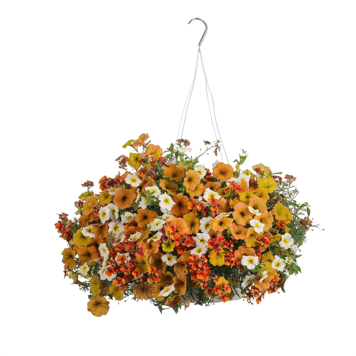 Proven Winners® Patio Plants|Afternoon Mirth Combination Hanging Basket 1