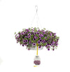 Patio Plants|Calibrachoa - Superbells Blue Moon Punch Mono Hanging Basket 1