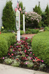 Proven Winners® Annual Plants|Impatiens - Infinity Blushing Lilac 4