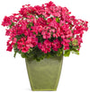Proven Winners® Annual Plants|Pelargonium - Boldly Hot Pink Geranium 2