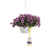 Patio Plants|Petunia - Supertunia Bordeaux Mono Hanging Basket 1