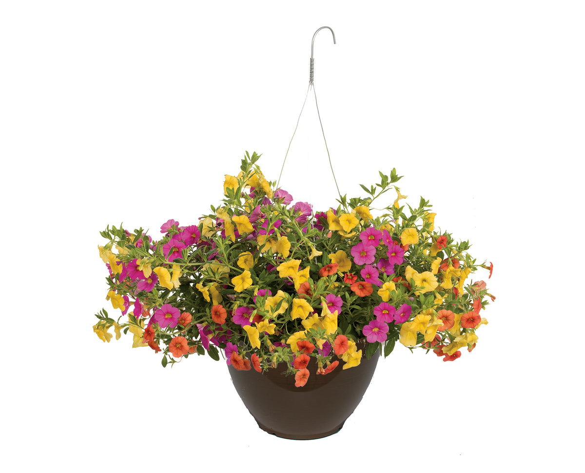 Proven Winners® Patio Plants|Candyland Combination Hanging Basket 1