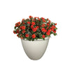 Proven Winners® Patio Plants|Carnelian Upright Combination 1