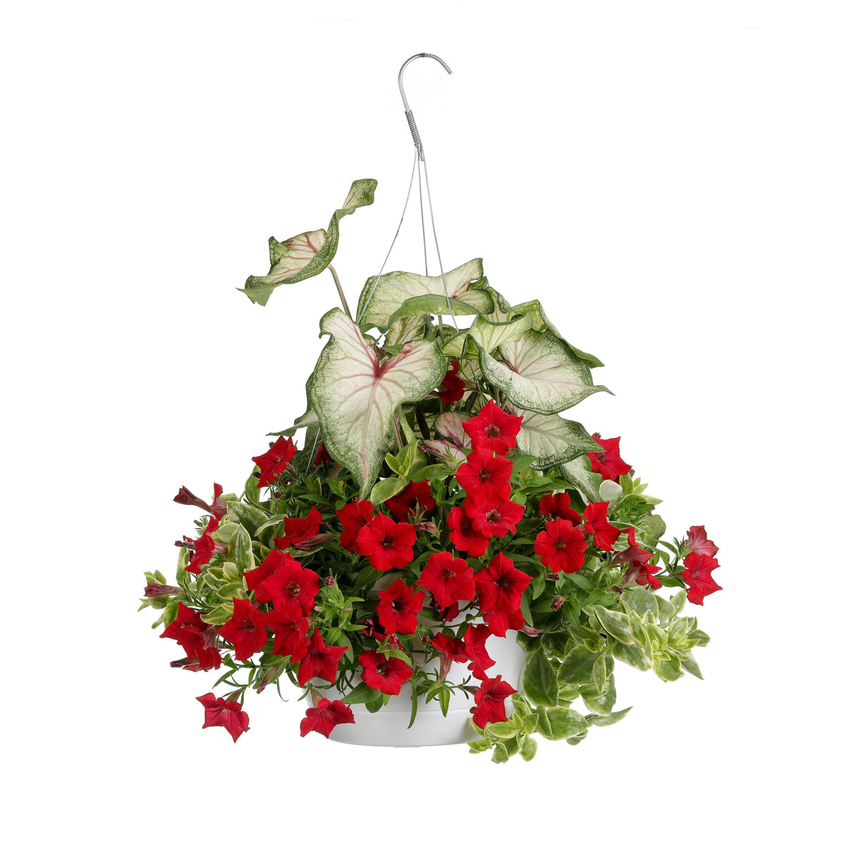 Proven Winners® Patio Plants|Embolden Combination Hanging Basket 1