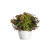Proven Winners® Patio Plants|Fireberry Upright Combination 1