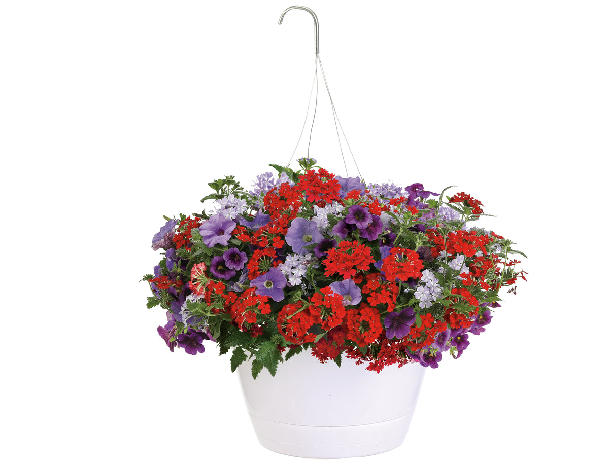 Proven Winners® Patio Plants|Five-O Combination Hanging Basket 1