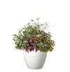 Proven Winners® Patio Plants|Frolic Upright Combination 1