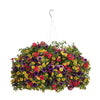 Proven Winners® Patio Plants|Fruit Salad Combination Hanging Basket 1