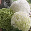Proven Winners® Shrub Plants|Arborescens - Incrediball Smooth Hydrangea 3